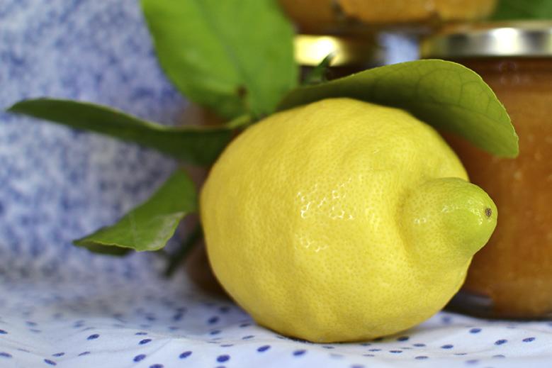 citron igp amalfi italy limone lemon